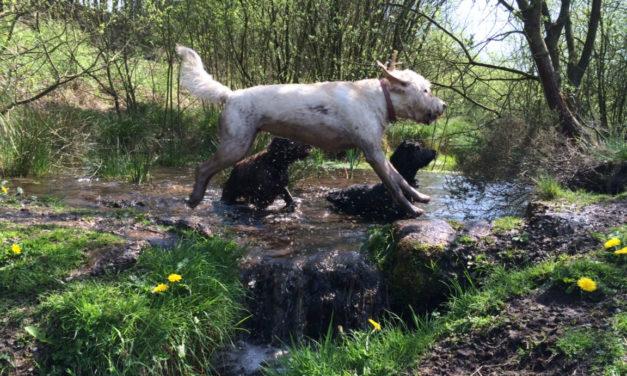 Dog Friendly B B Warwickshire